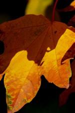 iPhone fondos de pantalla Otoño, hojas amarillas de primer plano