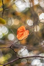 Preview iPhone wallpaper Autumn, yellow leaves, tree, twigs