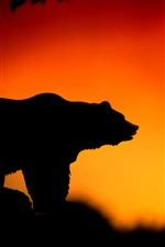Bear, sunset, silhouette