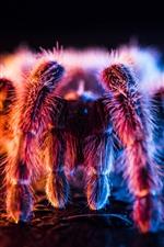 미리보기 iPhone 배경 화면 아름다운 거미, 빛, 보풀