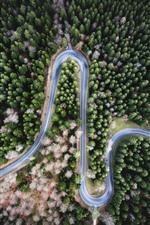 Preview iPhone wallpaper Bend road, trees, forest, top view