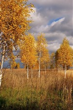 Preview iPhone wallpaper Birch, trees, grass, autumn