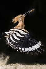 Bird flight, wings, catch insect