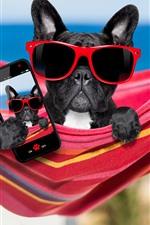 Black dog, sunglasses, phone, funny animal