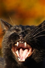 Preview iPhone wallpaper Black kitten yawn, tooth