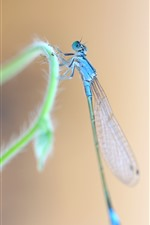Preview iPhone wallpaper Blue dragonfly, grass