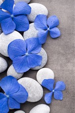 Preview iPhone wallpaper Blue flowers, stones, SPA
