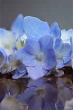 iPhone壁紙のプレビュー 青い紫陽花、花、水、反射