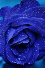 Preview iPhone wallpaper Blue petals rose, water droplets, blurry background