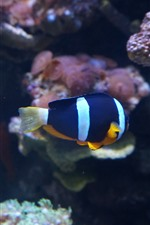 Preview iPhone wallpaper Blue white colors clownfish