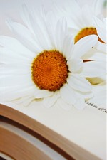 Preview iPhone wallpaper Book, white chamomile