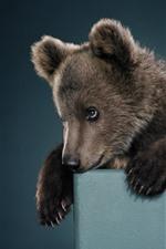 Brown bear cub, look