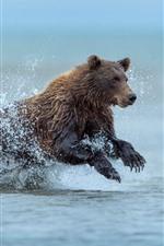 iPhone обои Бурый медведь, бегущий в воде, всплеск, Аляска