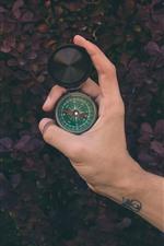 Bússola, mão, plantas