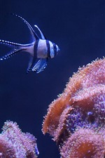 Preview iPhone wallpaper Coral and clownfish