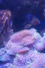 Preview iPhone wallpaper Coral, fish, rocks