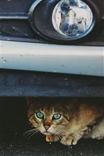 Preview iPhone wallpaper Cute cat under car