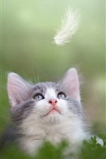 Preview iPhone wallpaper Cute kitten look at feather