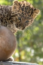 Preview iPhone wallpaper Cute leopard play a ball