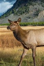 Deer, fawn, grass