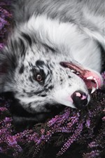 Preview iPhone wallpaper Dog, lavender