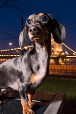 Preview iPhone wallpaper Dog look back, city, night