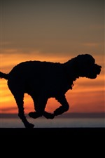 Preview iPhone wallpaper Dog run, silhouette, sunset