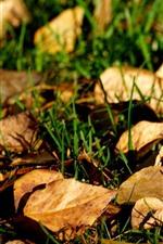 Folhas secas, grama, terra