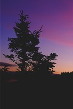 Preview iPhone wallpaper Dusk, trees, purple sky, silhouette