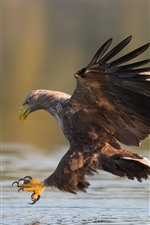 Preview iPhone wallpaper Eagle, water, wings, bird