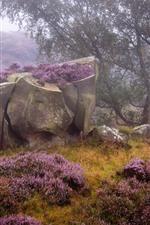 Preview iPhone wallpaper England, Derbyshire, Heather, Peak District, purple flowers, rocks, trees