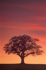 England, Derbyshire, trees, glow, red sky, sunset