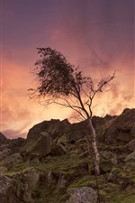 Preview iPhone wallpaper England, Leicestershire, trees, rocks, dusk