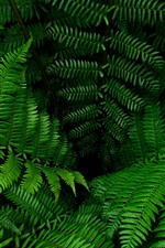 Preview iPhone wallpaper Fern, green leaves, plants