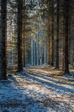 Preview iPhone wallpaper Finland, Savonlinna, forest, trees, snow, winter