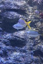Preview iPhone wallpaper Fish, water, underwater
