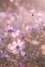 Preview iPhone wallpaper Flowers, hazy, summer, glare