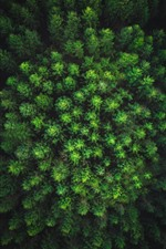 Forest top view, green
