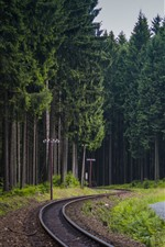 Preview iPhone wallpaper Forest, trees, railroad, power lines