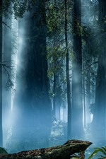 Preview iPhone wallpaper Forest, trees, rendering