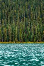 Floresta, árvores, rio, água