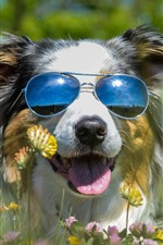 Preview iPhone wallpaper Furry dog, sunglass, wildflowers, funny animal