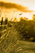 Preview iPhone wallpaper Grass, fence, morning, sunshine