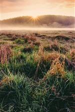 Preview iPhone wallpaper Grass, fog, morning