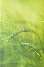 Preview iPhone wallpaper Grass spikelets close-up