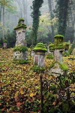Preview iPhone wallpaper Graves, cemetery, moss, crosses