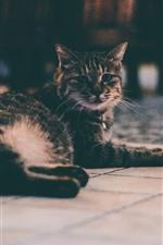 Gray cat look back, floor