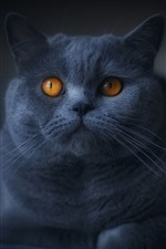 Preview iPhone wallpaper Gray cat, orange eyes, darkness