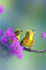 Preview iPhone wallpaper Green feather birds, purple flowers, tree branch