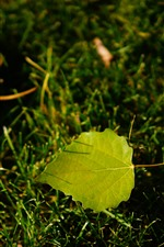Preview iPhone wallpaper Green leaf, grass, light